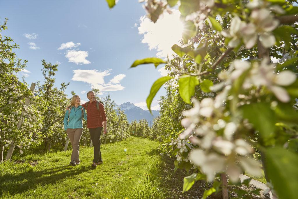 Jablka, Jižní Tyrolsko