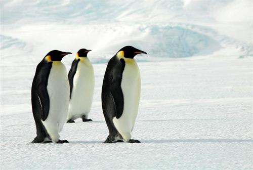 Čeští turisté dobývají Antarktidu