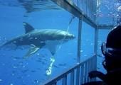 Nejsou prý tak nebezpeční, jak si myslíme (foto: divingwithsharks)