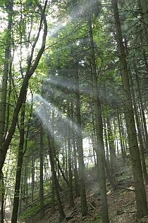 Sedlo - les