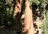 V hájemství obřích stromů vládne klid (foto: autor)