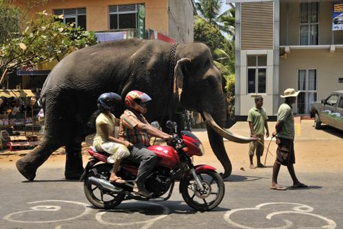 Reportáž: Srí Lanka rájem na skútru