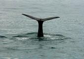 Jezdit za velrybami, nebo ne? Toť otázka